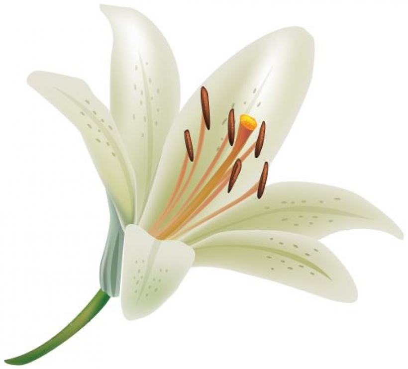 floral-clipart-lily-18
