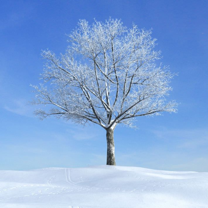 snow-covered-tree-in-winter-3d-model-obj