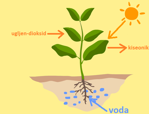 diagram-of-photosynthesis