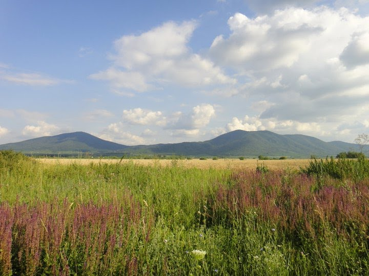 Резултат слика за vrsacke planine