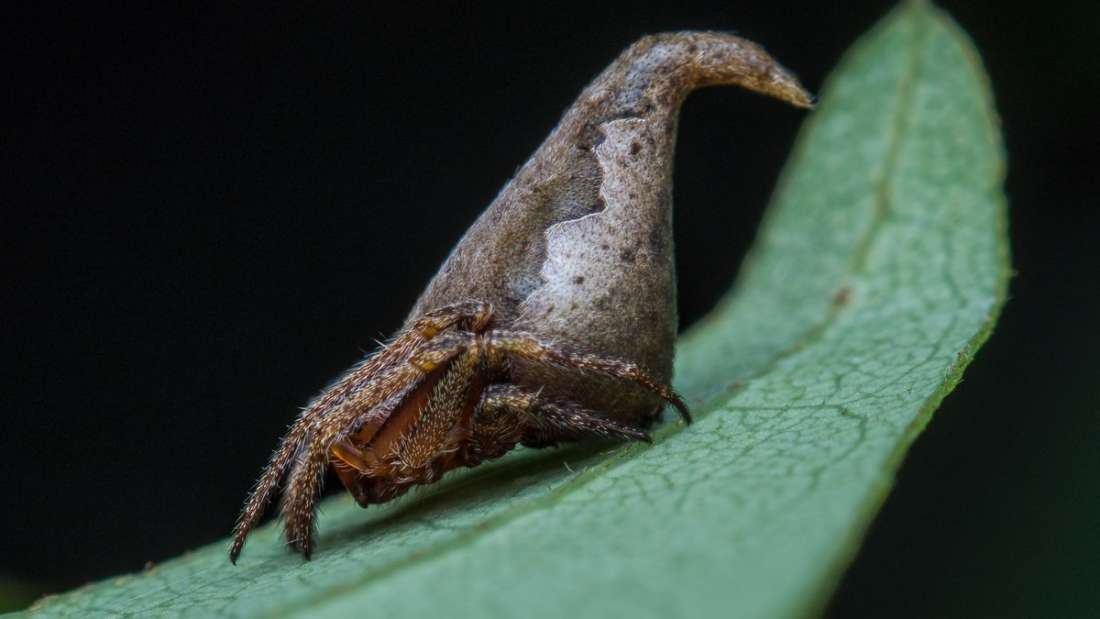 New Spider Species Named After Harry Potter Sorting Hat-min